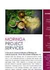 Moringa energy project services