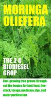 Biofuel - Moringa Biodiesel Business Plan Services